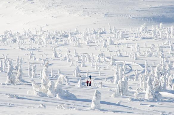 Foto av langrennsløyper på Trysilfjellet i vakkert vinterlandskap